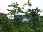 花園剪影_20190416-19:P2240219.JPG