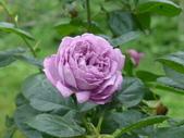 花園剪影_20190416-19:P2240654.JPG