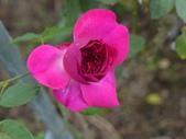 花園剪影_20190416-19:P2240334.JPG