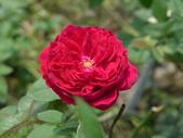 花園剪影_20190416-19:P2230962.JPG