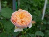 花園剪影_20190416-19:P2240416.JPG