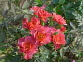花園剪影_20190416-19:P2230980.JPG
