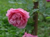 花園剪影_20190416-19:P2240433.JPG