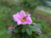 花園剪影_20190416-19:P2240363.JPG