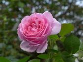 花園剪影_20190416-19:P2230715.JPG