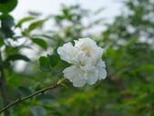 花園剪影_20190416-19:P2240221.JPG