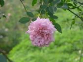 花園剪影_20190416-19:P2240282.JPG