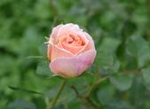 花園剪影_20190416-19:P2230907.jpg