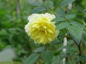 花園剪影_20190416-19:P2240437.JPG
