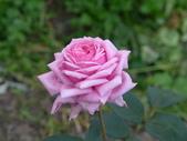 花園剪影_20190416-19:P2230680.JPG
