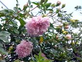 花園剪影_20190416-19:P2230797.jpg