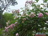 花園剪影_20190416-19:P2240643.JPG