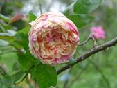 花園剪影_20190416-19:P2240656.JPG