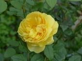 花園剪影_20190416-19:P2240647.JPG
