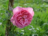 花園剪影_20190416-19:P2240122.JPG
