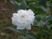 花園剪影_20190416-19:P2240187.JPG