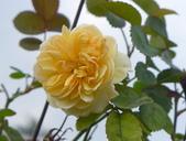 花園剪影_20190416-19:P2230885.jpg
