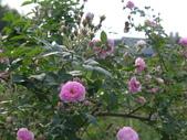 花園剪影_20190416-19:P2240256.JPG