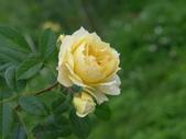 花園剪影_20190416-19:P2240378.JPG