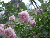 花園剪影_20190416-19:P2240286.JPG