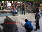 台南鱷魚王:IMG_1288.JPG