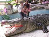 台南鱷魚王:IMG_1291.JPG