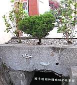 台中之旅-楓樹社區:IMG_4823.JPG