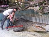 台南鱷魚王:IMG_1296.JPG
