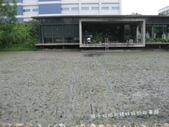 苗栗苑裡山水有機農場一日農夫體驗營 :IMG_7780.JPG