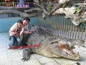 台南鱷魚王:IMG_1335.JPG