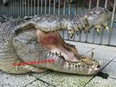 台南鱷魚王:IMG_1337.JPG