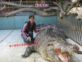 台南鱷魚王:IMG_1339.JPG