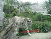 高雄壽山動物園:IMG_2009.JPG