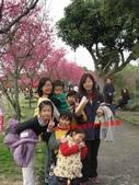 2012古坑櫻花正開,,:IMG_1839.JPG