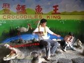 台南鱷魚王:IMG_1245.JPG