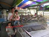 台南鱷魚王:IMG_1249.JPG