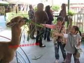 台南鱷魚王:IMG_1259.JPG