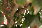 聖恩堂的庭院:在桂花樹下007.JPG