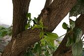 聖恩堂的庭院:在桂花樹下017.JPG