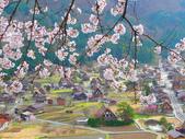 日本旅遊選集:櫻花掩映下的合掌村