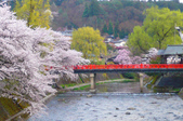 日本旅遊選集:高山市的櫻花
