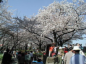 日本東京賞櫻:P4090270.JPG
