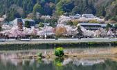 日本旅遊選集:京都 嵐山 櫻花 & 倒影