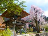 日本旅遊選集:合掌村的櫻花