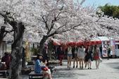 日本旅遊選集:京都 嵐山 中之島公園