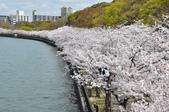 關西賞櫻 大阪櫻之宮 - 壯觀的河岸櫻花大道:
