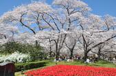 關西賞櫻 京都府立植物園: