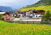 北義之旅:La Villa: 滿山遍野的小黃花