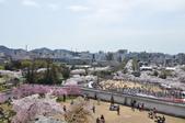 關西賞櫻 春滿姬路城: