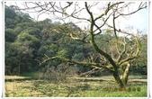 福山植物園:IMG_1311.JPG